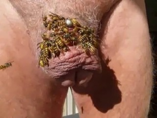 much wasp on cock